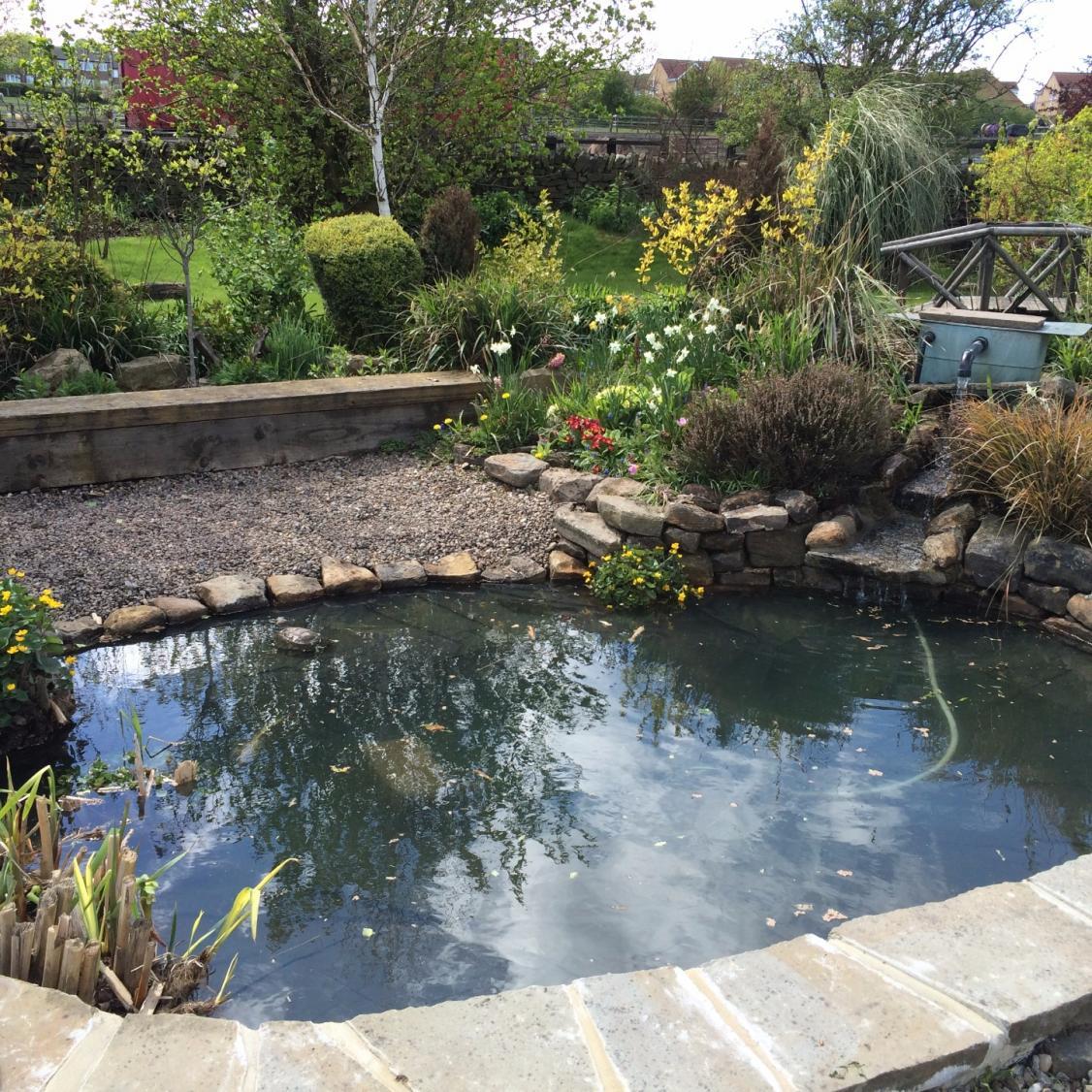 Pond Make Over